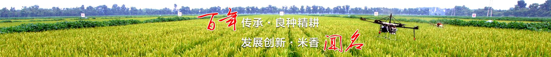 中国稻作历史